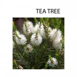 Tea tre etherische olie