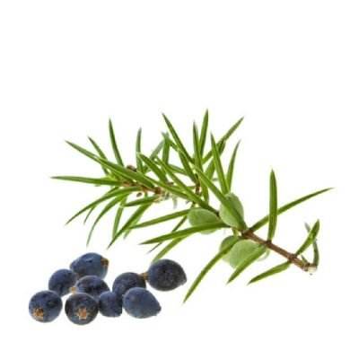 Jeneverbes - Juniperus communis