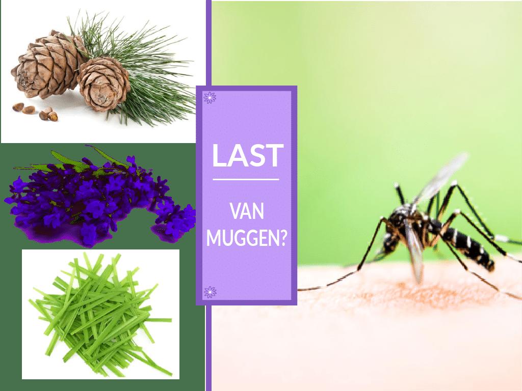 muggen werende vernevelblend